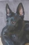 Sprengstoffspürhund , Luftfrachtkontrolle, spx by edd
